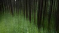 雨後の杉林 - HANAZONO