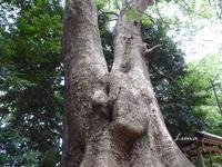 ムーミンの木にまた会えた - ひもろぎ逍遥