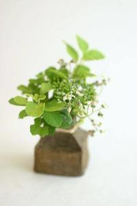 小花瓶の植物 - 宙吹きガラスの器