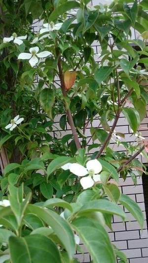 夏ですね! - 文京区 洋裁教室「ほっこりソーイング」初心者さんのソーイングカフエ