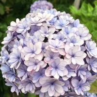 今日も丸い物たち - テディベアのブログ Urslazuli