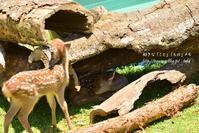 鹿の親子 - 好きな「こと」「もの」メモ