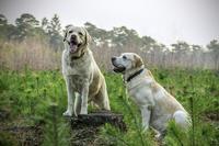 おすすめのドッグカフェ、犬カフェを教えます! - ドッグカフェや犬カフェが好きな人に見てほしい!
