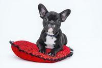 お気に入りのドッグカフェや犬カフェ情報を共有! - ドッグカフェや犬カフェが好きな人に見てほしい!