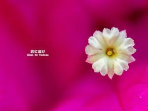 この花は、な~~んだ (^^ - 君に届け