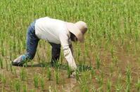 ブログを再開、米作りも再開。 - 京都の雪国…久多の里便り。