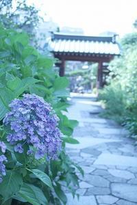 鎌倉 大巧寺 - 暮らしを紡ぐ