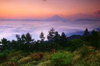 29年6月の富士(21)甘利山ツツジと富士 - 富士への散歩道 ~撮影記~