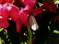 いい季節! - 花と天然石ハンドメイドジュエリー