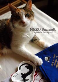 猫サミットの記念品&お土産 - Kyoko's Backyard ~アメリカで田舎暮らし~