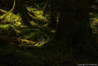 苔の森 - ひつじ雲日記