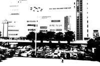 宇都宮・街中散歩2 - TACOSの野鳥日記