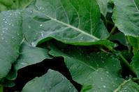 雨と菜園 その2 - オムイと森羅万象