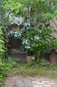 紫陽花とcotton フェイクの小屋のフェイクの取っ手 - my story***