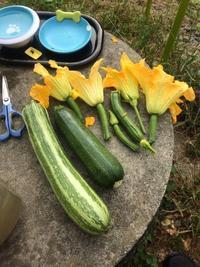 ニンジンまだ小さかったけど甘い!6/23のお弁当とズッキーニから学んだこと - にじまる食堂 & にじまる農園