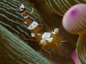 甲殻類 - 今日の海