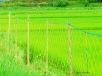 奥山の道 - PHOTO俳句ブログ
