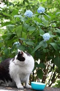 猫を撮る - miyabine's フォト日記2~身の周りのきれい・可愛い・面白い~