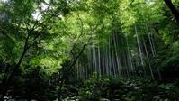 梅雨時の瑞泉寺 - じるかぼ日記2