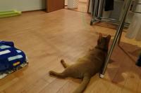 膝の取り合い - 「両手のない猫」チビタと愉快な仲間たち