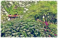 能護寺の紫陽花2 - 光 塗人 の デジタル フォト グラフィック アート (DIGITAL PHOTOGRAPHIC ARTWORKS)
