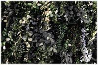 leaves - コバチャンのBLOG