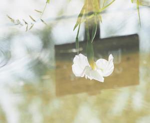 万博公園花菖蒲 - 心の万華鏡