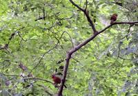 梅雨空の下 - 西多摩探鳥散歩
