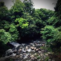 今日はダメだ‼️〜6/25 美里の川は水でいっぱい。 - オヤジNEKOの今日も青空