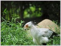 千葉市動物公園‐6   086) - 趣味の写真 ~オリンパスE-M1MarkⅡとE-M1、E-5とたまにフジフィルムXZ-1も使っています。~