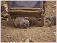 千葉市動物公園‐7   087) - 趣味の写真 ~オリンパスE-M1MarkⅡとE-M1、E-5とたまにフジフィルムXZ-1も使っています。~