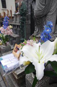 三ノ輪/千束/下谷  追悼撮り歩き - 東京雑派  TOKYO ZAPPA