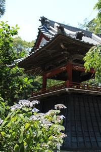 山寺の紫陽花・3♪  ~鐘楼と紫陽花~ - happy-cafe*vol.2