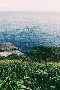 海と紫陽花@城ヶ島 - Good Morning, Gorgeous.