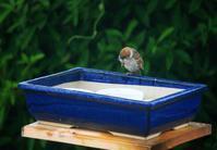 濡れ雀 - ぶん屋の抽斗
