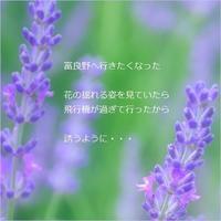 ラベンダー - m*photopoem