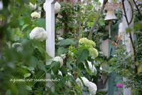 梅雨空と夏の庭♪ - azumiの夢まど