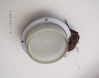 燕が運んできた小さな幸せ - マルチナチャッコ