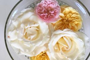 花がら摘みでバラがいっぱい - バンクーバー不動産やのカバン持ち