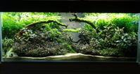 ブセファランドラ水槽に水流を作る - 癒しのアクアライフ