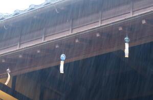梅雨の日曜日に - 風に舞ふ