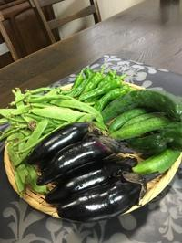 畑の花 - 今夜の夕食