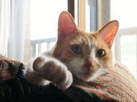 猫の右手 - ぎんネコ☆はうす