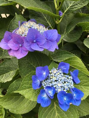 6月のロゼブランシェ - 横浜 白楽のプリザーブドフラワー教室 rose blancheへようこそ