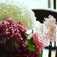 ピンクアナベルとアナベルとホットレッド - バラの庭でお茶をどうぞ