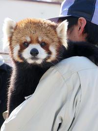 6月26日(月) 小休止 - ほのぼの動物写真日記