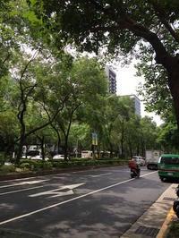 陳記百果園で最後のマンゴーを堪能  - mayumin blog 2