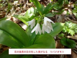 牛形山 - 仙台やまくさ会