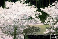 移りゆく桜色 - THANKS