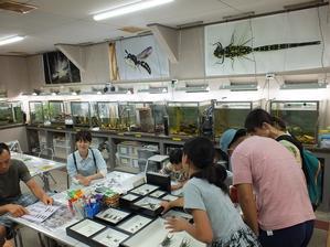 6月25日(日)の昆虫館 - こどもとむしの秘密基地:佐用町昆虫館